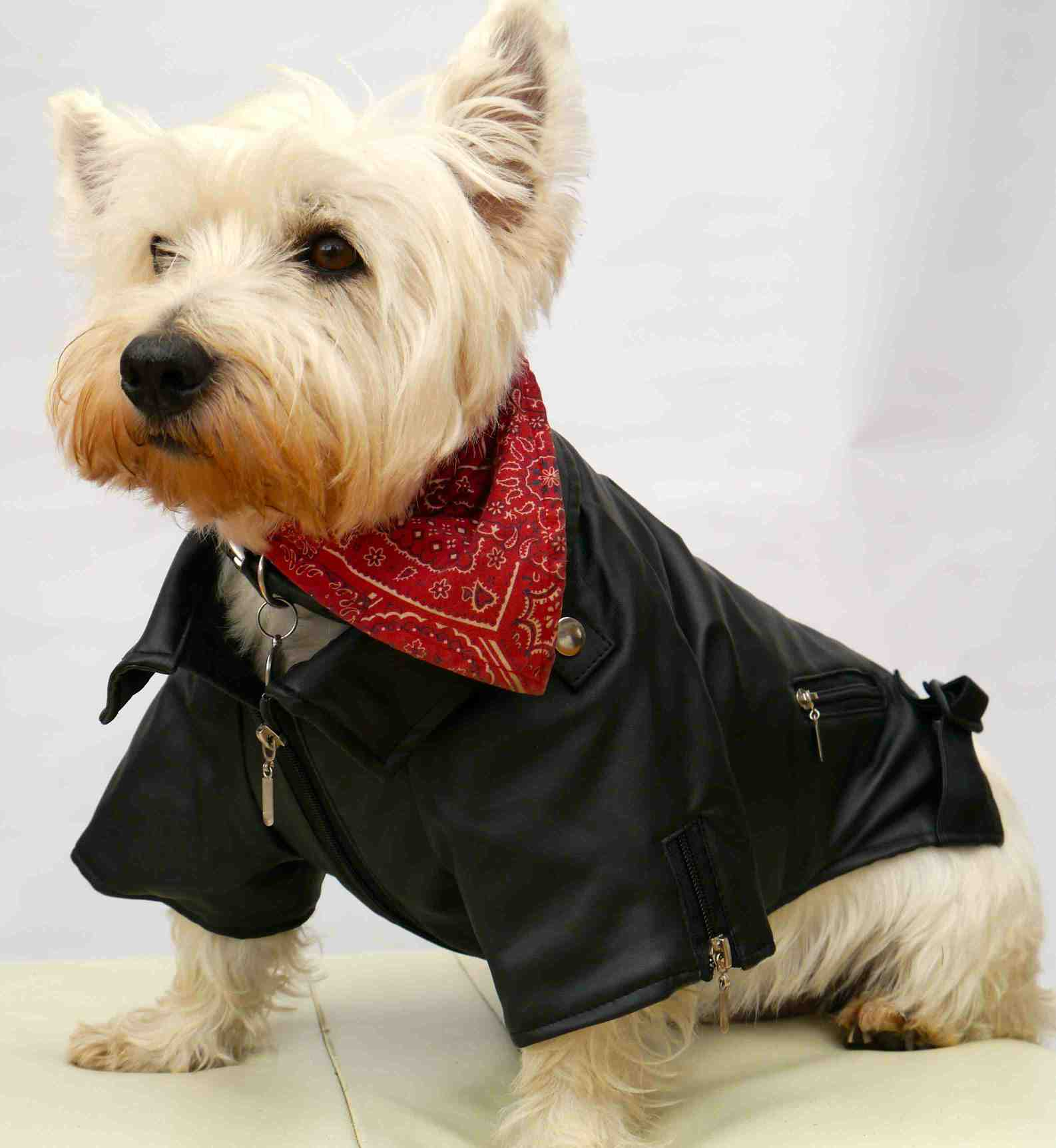 Leather jacket for dogs - Watch Dogs Coat Jacket Talbot Green Ping Park 8 Animals Who Are Ready For Winter